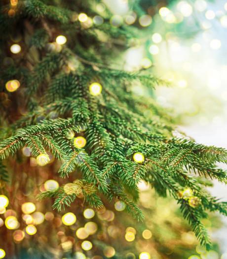 Dordtse kerststal in Wilhelminakerk krijgt voor het eerst een herderin