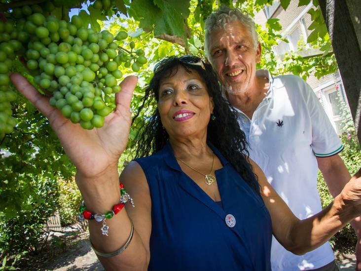 Staart maakt nog taart van peren uit eigen tuin