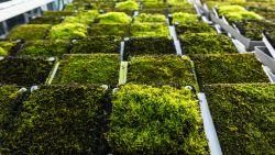De voordelen van een groendak: roofing gaat veel langer mee en isolatie tegen hitte en kou