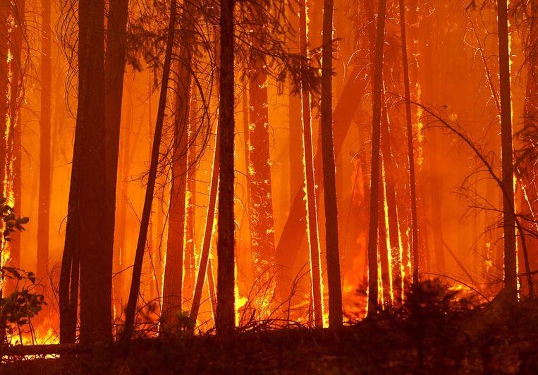 Bomen in California die in vlammen opgaan Beeld epa