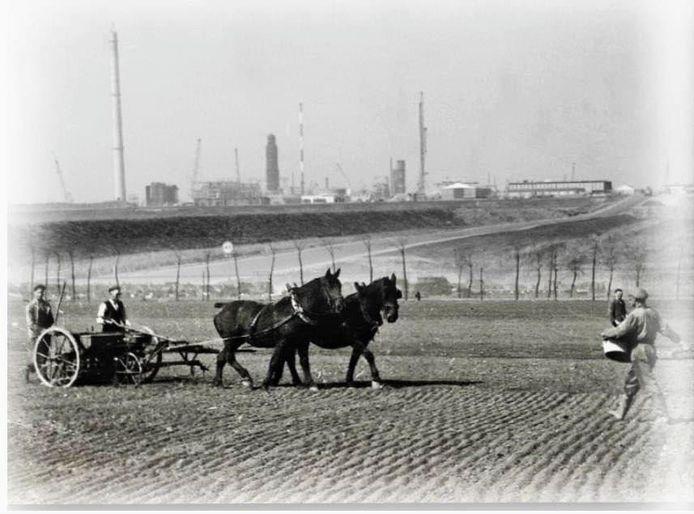 Van FB-pagina Klundert in Vroeger Tijden, toen boeren nog met paardenkracht werkten.