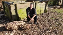 """Drie schapen doodgebeten in Weelde: """"Wolf of hond? DNA moet klaarheid scheppen"""""""