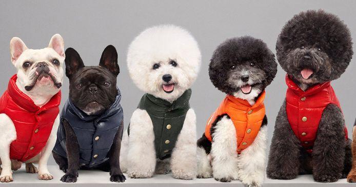 Een campagnebeeld van de collectie donsjassen voor honden van Moncler en Poldo Dog Couture.
