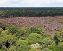 Exemple de déforestation au Brésil