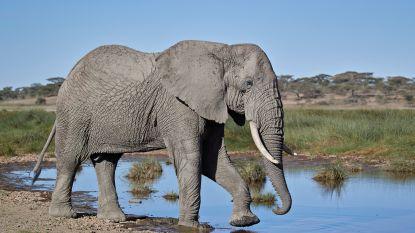 """In Genève ligt het lot van de olifant in de weegschaal: """"Beschermen kost veel geld, het mag ook iets opleveren"""""""