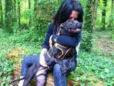 Les images de Curtis, le chien d'Elisa Pilarski, placé à l'isolement
