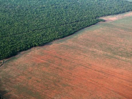 Forêts tropicales: l'équivalent d'un terrain de football disparaît toutes les six secondes