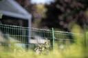 In Puiflijk is onenigheid ontstaan nadat een bewoner prikkeldraad op een hek tussen basisschool 't Geerke en een woning had aangebracht.