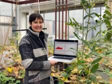 """UGent-onderzoekers luisteren naar de stem van planten: """"Als ze niet genoeg water hebben, maken ze klikgeluiden"""""""