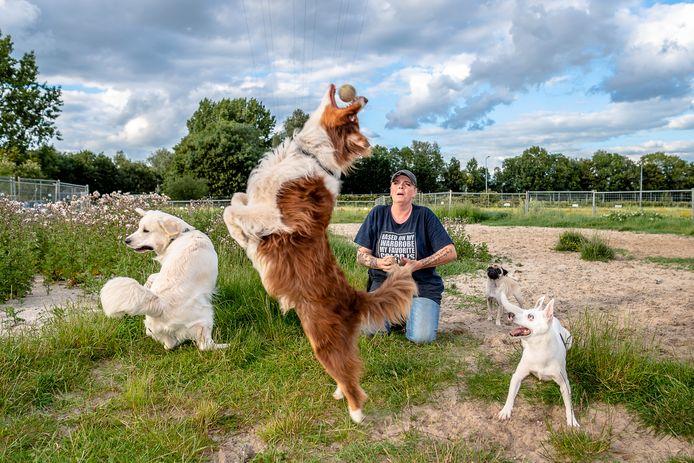 Angelique Heijboer van de hondenuitlaatservice Dierengeluk zoekt een nieuw stukje grond om verder te kunnen met haar bedrijfje om de logé-honden lekker te kunnen laten spelen.