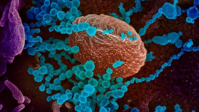 Immuungeheugen van covidpatiënten sterker dan gedacht: tot 8 maanden beschermd tegen een herbesmetting