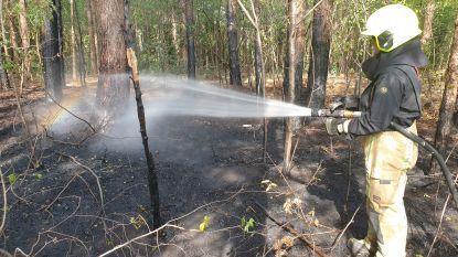 Bosbrand in Ramsel: 32 vierkante meter bos gaat in vlammen op