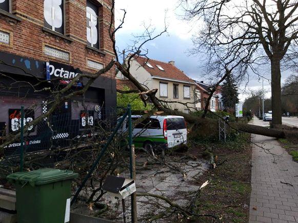 Ook aan de Bredabaan in Brasschaat sneuvelden heel wat bomen.