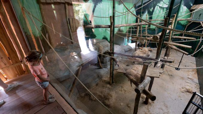 Expeditie Bonobo: 400 vierkante meter bonoboplezier
