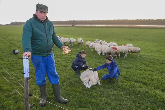 Veehouder Johan van Benthem met zijn kinderen Dinant en Jop bij het dode schaap. In de hand van de veehouder de stukken brood die in het weiland waren gegooid. Aan een paaltje hangt nu een briefje met waarschuwing.