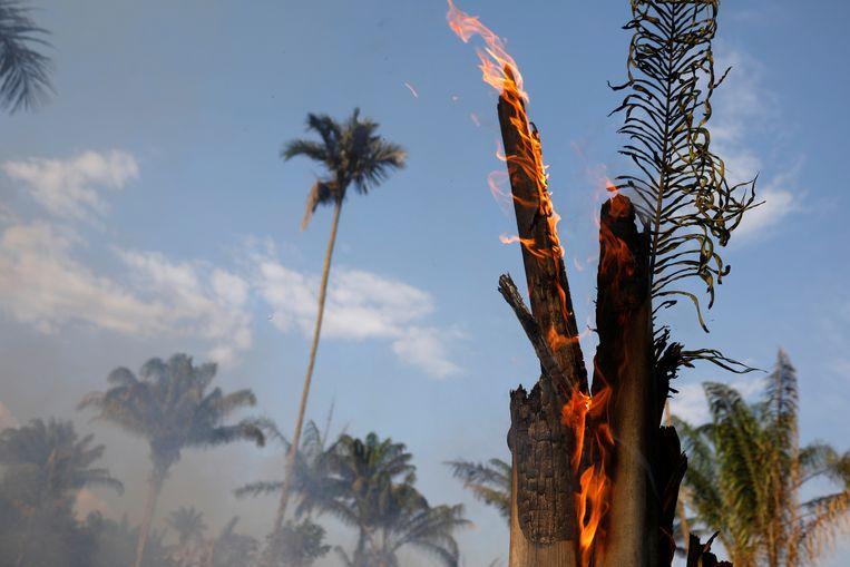 Een stuk Amazone-regenwoud brandt voordat het wordt geruimd door boeren in de Braziliaanse deelstaat Amazonas.  Beeld Reuters