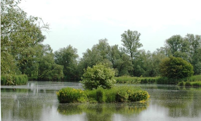De Biesbosch. (achieffoto)