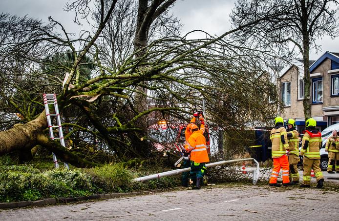 Aan de Sterrenlaan in Puttershoek waaide een flinke boom om.