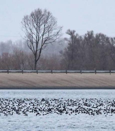 Boswachter: vogels Biesbosch van slag door oud en nieuw