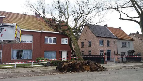 Een boom viel in de Brechtsebaan op een woning. De schade is groot.