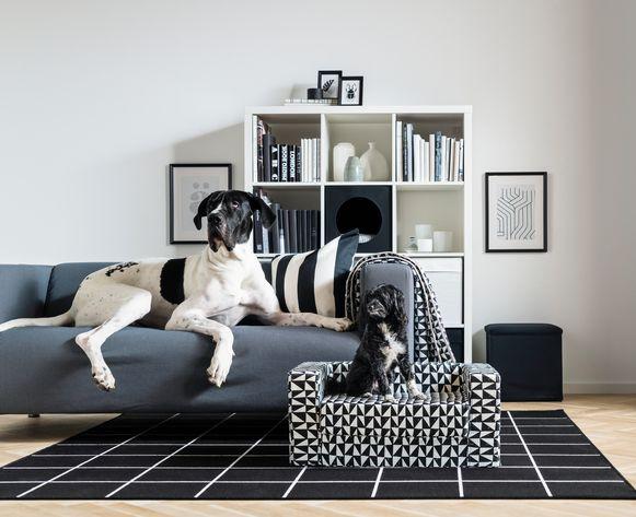 Hondenzetel Lustig, 49,99 euro