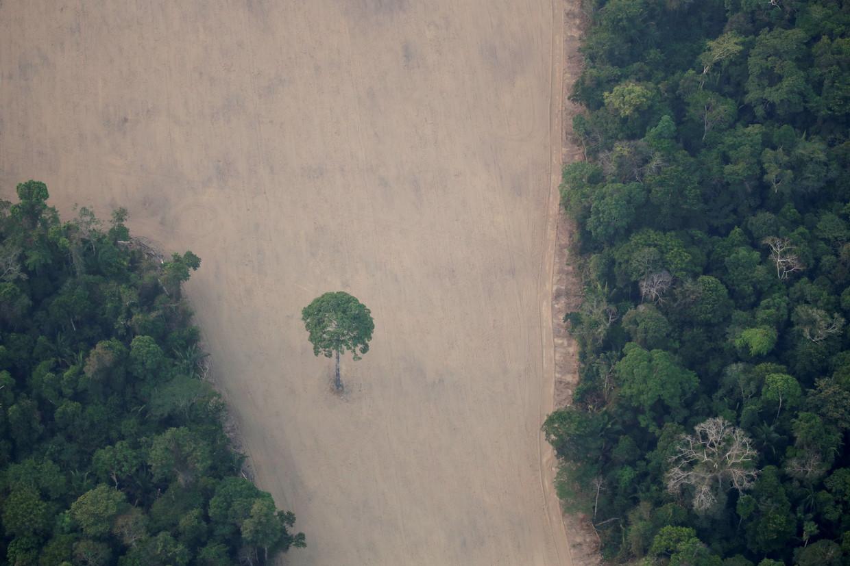 Een ontbost deel van de Amazone
