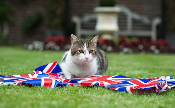 Larry de 'chief mouser' van de premier.