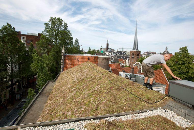 Een groen dak op het Concious Hotel in Amsterdam. Beeld Martijn Beekman / ANP