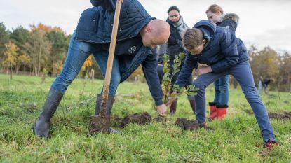 Meetjesland krijgt er 25.000 bomen bij