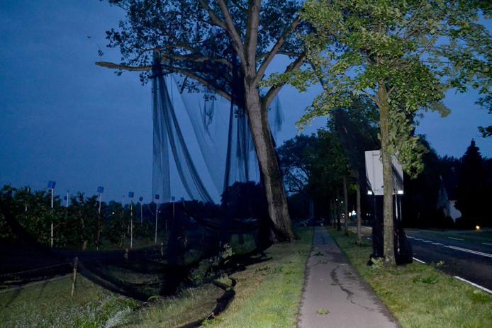 Netten van de kersenbomen waaiden in de bomen langs de weg.
