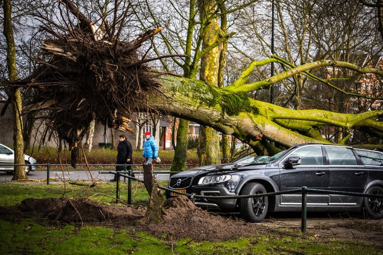 Een boom valt op een auto in Geldrop na de zware storm eind 2018. Beeld Hollandse Hoogte / Rob Engelaar