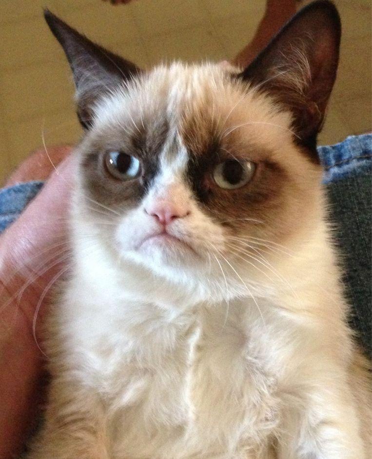 De foto op Reddit die de 'carrière' van Grumpy Cat startte.