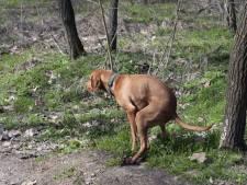 Test: wat weet jij over hondenpoep?