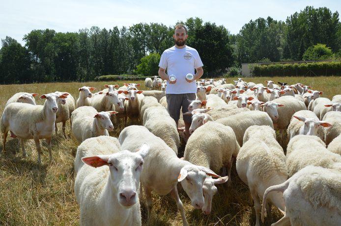 Laurens De Middeleer van schapenmelkerij Bosschelle in Denderhoutem (Haaltert) met zijn Vlaamse schapenplattekaas tussen zijn schapen.