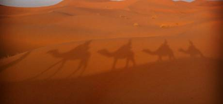 Zomerfoto's: op pad met kamelen, de zoektocht naar een konijn en een kikkervriend