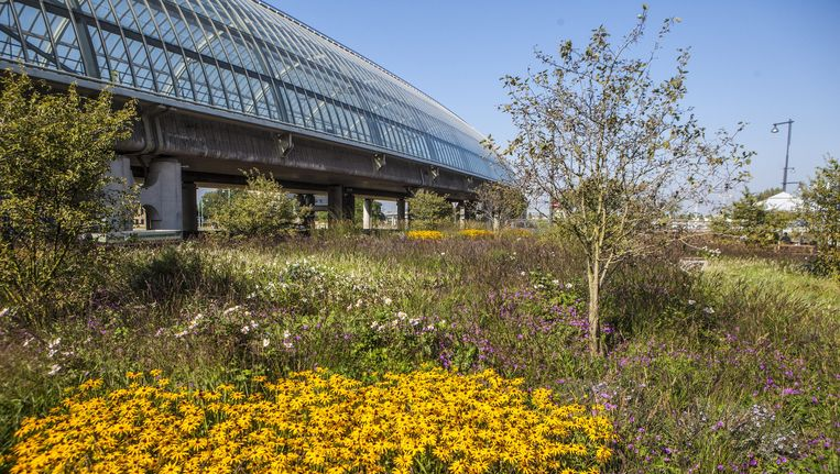 Het Orlyplein: 8000 vierkante meter aan groen, bestaande uit 85.000 bomen, bloemen en planten Beeld Floris Lok