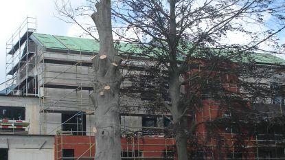 """Raadslid Debbaut (Groen) pleit voor bescherming waardevolle bomen: """"Grote beuken dood  door aanpalend bouwproject"""""""