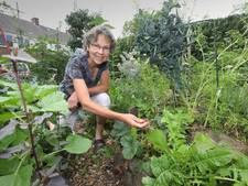 In een halve dag naar een eetbare tuin