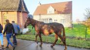 Paardenstal in lichterlaaie: één dier omgekomen, eigenaar in levensgevaar overgebracht naar ziekenhuis