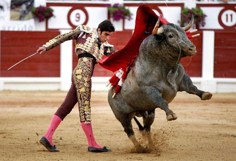 Stierenvechter Miguel Angel Perera tijdens het 'Feria de Gijon' in het noorden van Spanje, afgelopen weekend. Beeld epa