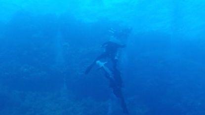 VIDEO. Oceanische witpunthaai bijt Duitse duiker in Egypte