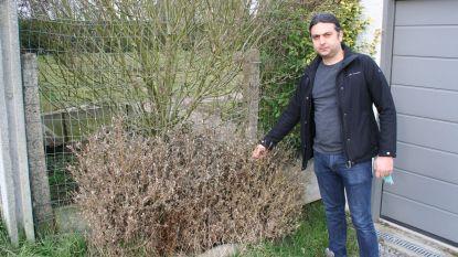 Op zoek naar 'pallemaaj' zelfs tot in Wallonië