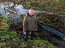 Bever bezorgt Waterschap Rivierenland handenvol werk: 'Het is soms dweilen met de kraan open'