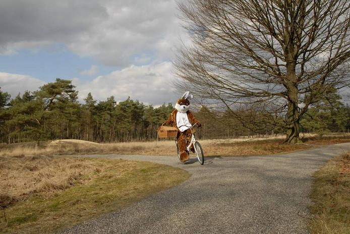 foto Nationale Park De Hoge Veluwe.