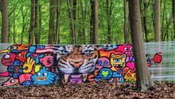 Graffitikunstenaar Vexx gebruikt het prachtige Hallerbos als canvas
