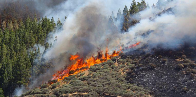 Een grote vuurhaard in Artenara