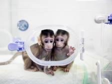Een gekloonde aap is nog geen gekloond mens