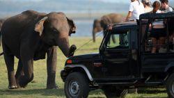 Op safari! Zo spot je de grootste dieren  ter wereld (en zoveel kost dat)