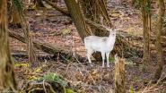 """Natuurpunt roept wandelaars op: """"Het is te druk in het Kravaalbos, ga naar een ander natuurgebied"""""""