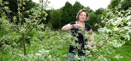 Hopen op truffels als tennisballen in Wageningse truffelgaard
